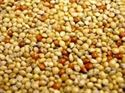 Picture of Willsbridge Mixed Millet Seeds 20kg