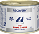 Picture of Royal Canin Recovery Dog/Cat 12x195g