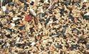 Picture of Willsbridge Specialist Greenfinch Mix 20kg