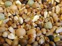Picture of Willsbridge Pigeon Squeaker No Bean Mix 20kg