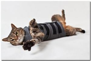 Picture of Thundershirt For Cats Heather Grey Large