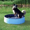 Picture of Dog Pool Trixie